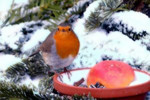 Making Sure that Your Garden Stays Healthy During the Winter Months