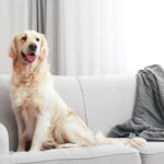 Happier Home: How to Make Your Home Pet Friendly