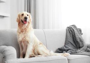 Pet Friendly Home