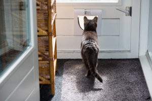 pet-proof furniture