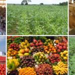 A Short Report on Opportunities for Investment in Agriculture in Nigeria