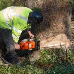 Top 5 Tips for Choosing the Best Tree Cutting Services
