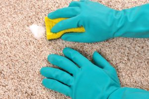 Clean your Carpet