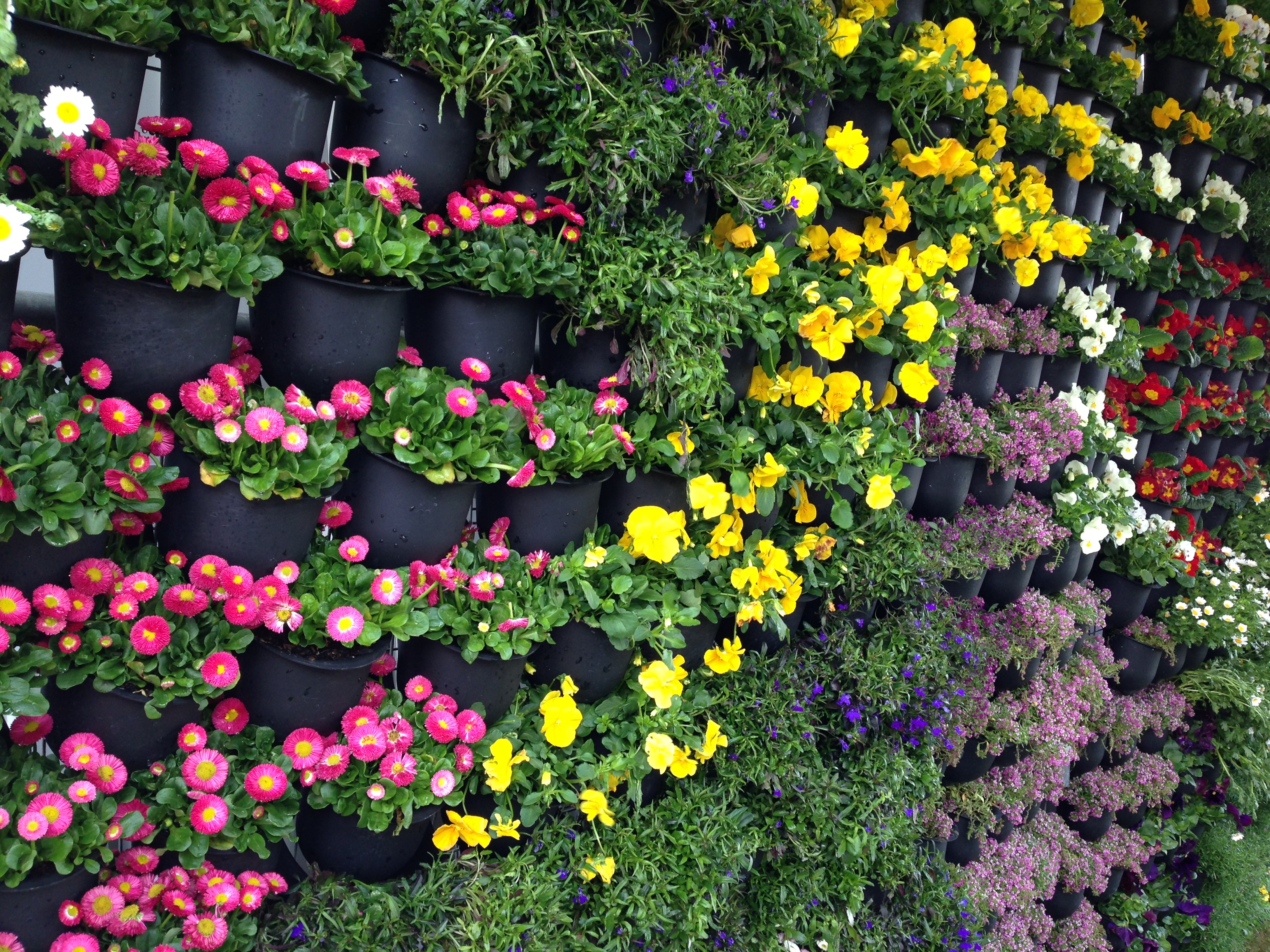 6 Potential Tips Amp Tricks To Maintain A Colourful Garden