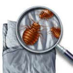 Preparing Your Home for Spring Pests